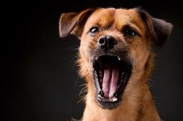 Ko darīt, ja suns rej?