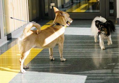 Biovet veterinārā kl...