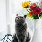 Kaķu vārdi - kalendārs