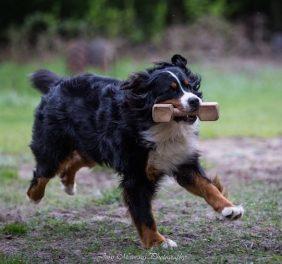 Elibird suņu sports
