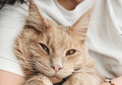Cat Care Community