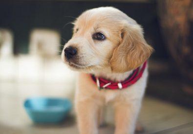 Toto veterinārā klīn...