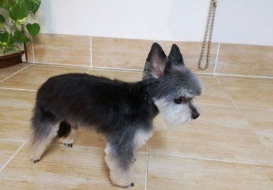 Unas suņu frizētava