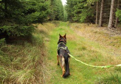 Racedog suņu sports