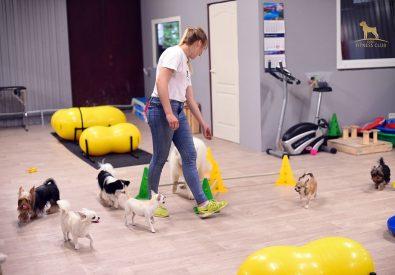 Dog Fitness Club suņ...
