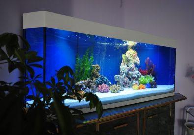 Aquarium&Design...