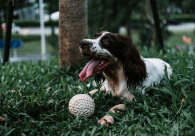 My Perfect Dog suņu ...
