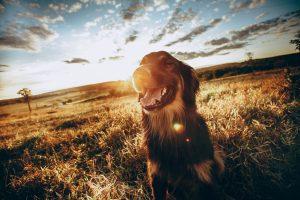 Suņu vārdu kalendārs